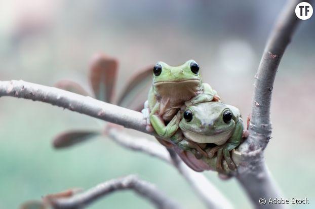 La position de la grenouille, un classique en devenir
