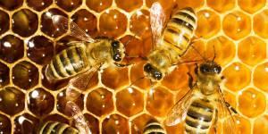 10% du miel commercialisé en France est faux