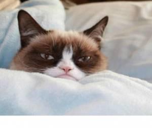 Le Grumpy Cat bientôt dans un film