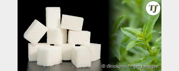 La stévia : sucrer pour zéro calorie