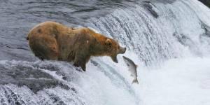 Manger du saumon est-il dangereux pour notre santé ?