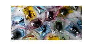 Des animaux vivants dans des amulettes choquent en Chine