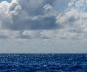 Requins : les eaux réunionnaises sont-elles trop dangereuses pour s'y baigner ?