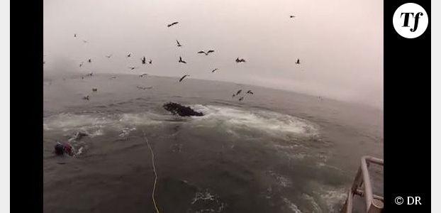 Des baleines manquent d'engloutir des plongeurs par erreur - Vidéo