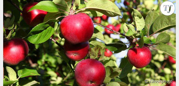 Les pommes changent de goût à cause du réchauffement climatique