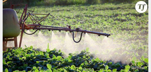 3 conseils pour éviter de manger des pesticides