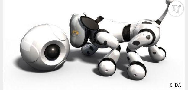 Noël 2013 : Où acheter Zoomer le robot chien en rupture de stock ?