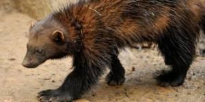 """Zoo de Vincennes : achetez dès maintenant vos billets pour le futur """"parc zoologique de Paris"""""""