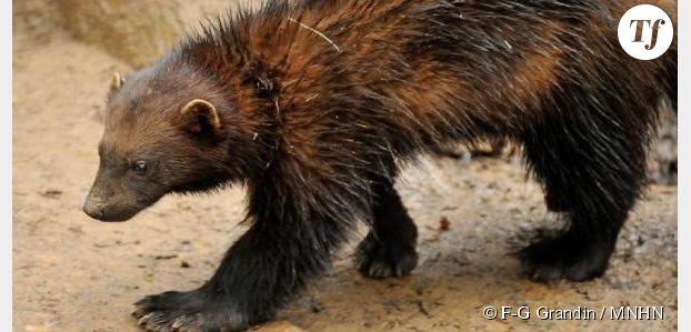 Zoo de vincennes achetez d s maintenant vos billets pour for Parc zoologique 78