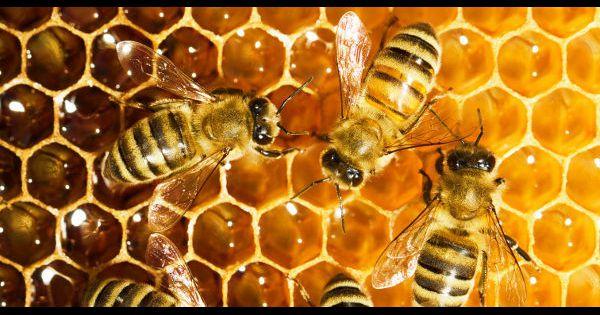 """""""Si les abeilles disparaissent, les jours de l'homme sont comptés"""" - Page 2 153992-banque-du-miel-investir-dans-une-ruche-pour-sauver-les-abeilles--600x315-1"""