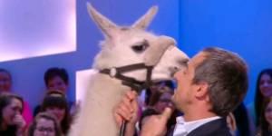Le Grand Journal : Serge le lama remplace Doria Tillier à la météo – en vidéo