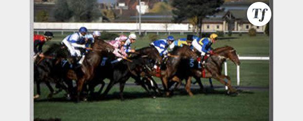 Horse-coaching : des chevaux pour former au leadership