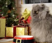 """Les chats les plus célèbres du web lancent leur clip """"dur d'être un chat à Noël"""""""