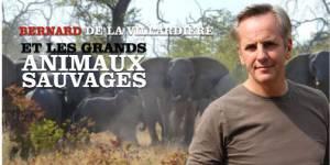 Bernard de la Villardière et son dangereux safari avec des animaux sauvages  – M6 Replay