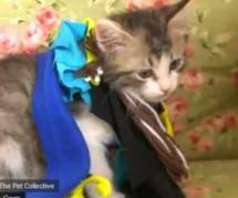 YouTube : la Reine des neiges racontée avec des chatons