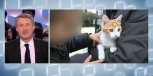 Grand Journal : Oscar le chaton va mieux et répond aux questions d'Antoine de Caunes