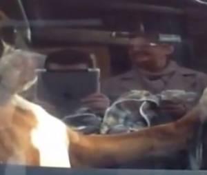 Enfermé dans une voiture ce chien a trouvé le klaxon - vidéo