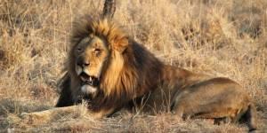 """Sorties ciné : """"African Safari 3D"""", sur les traces des lions et des éléphants"""