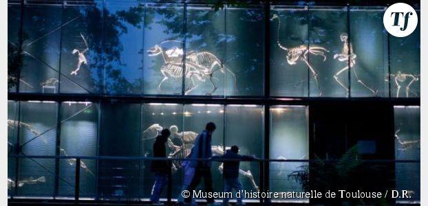 Nuit des Musées 2014 : que visiter à Paris et ailleurs ?