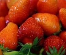 Fraises : scandales et business autour du fruit star de l'été – France 5 Replay / Pluzz
