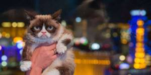 Journée mondiale du chat : les 10 meilleures façons de lui graisser la patte