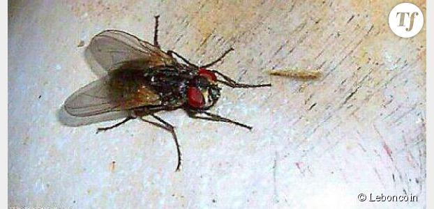 Le Bon Coin : une annonce dégoûtante pour une mouche