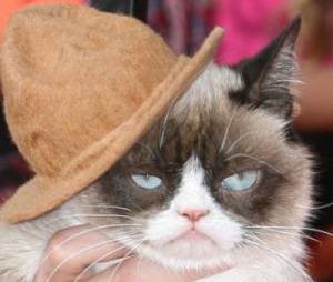 Grumpy Cat : le salaire mirobolant de la star des lol cats