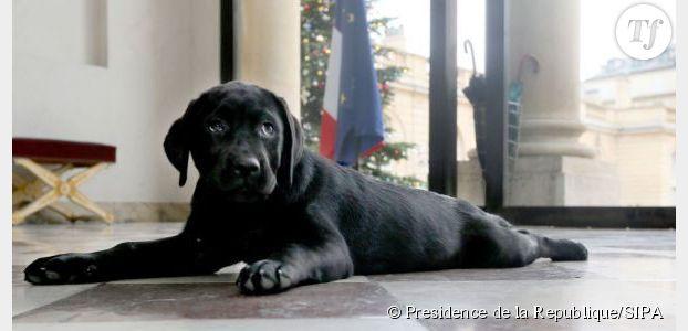 Philae : le chien de François Hollande pleure depuis son arrivée à l'Elysée