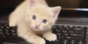Se faire livrer un chaton pour sa pause déjeuner, c'est possible