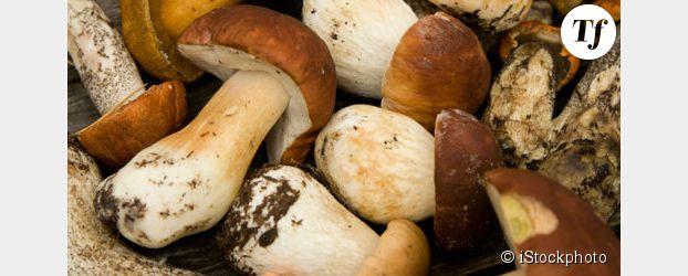 Comment trouver et cuisiner les c pes terrafemina - Champignons secs comment les cuisiner ...
