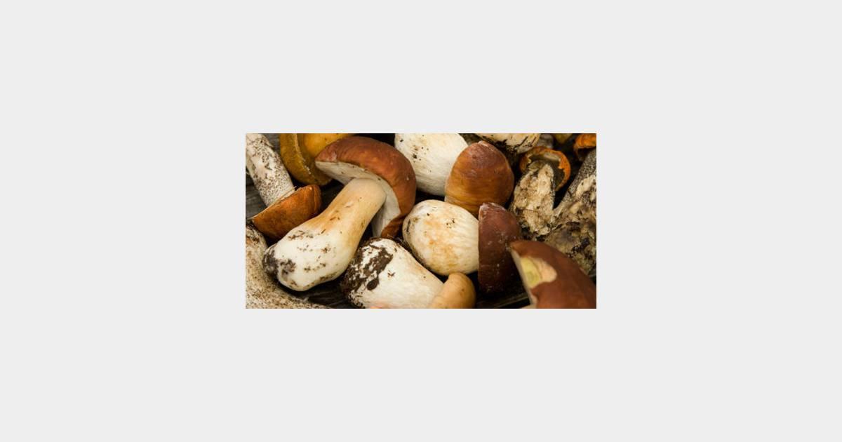 Comment trouver et cuisiner les c pes terrafemina - Comment cuisiner des flageolets en boite ...