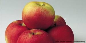 Tarte aux pommes et aux fruits rouges