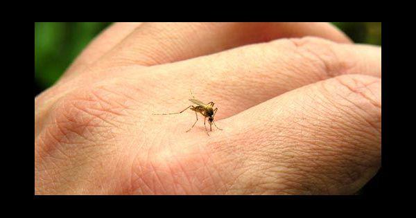 moustiques comment ne pas se faire piquer cet t. Black Bedroom Furniture Sets. Home Design Ideas