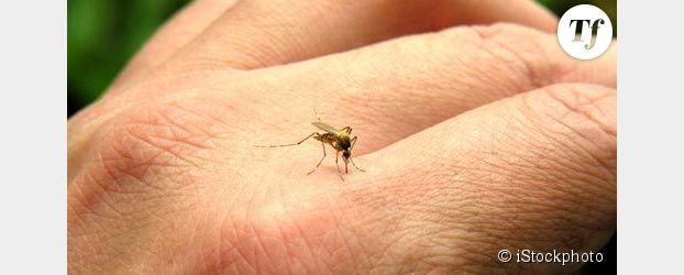 Moustiques : comment ne pas se faire piquer cet été ?