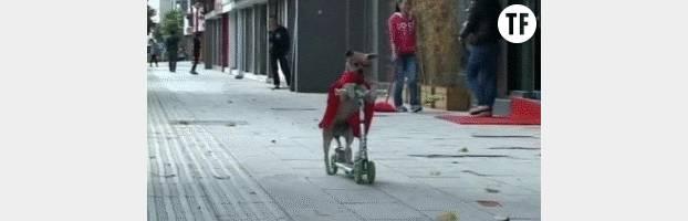 Si vous n'êtes ni un enfant, ni un chien avec une cape, abstenez-vous.