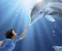 Winter le Dauphin vs Le Roi Lion au Box Office US - Vidéo
