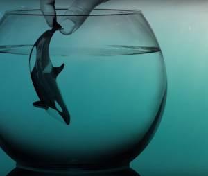"""""""Je suis Morgan"""" : la vidéo crève-coeur qui montre la réalité d'une orque en captivité"""
