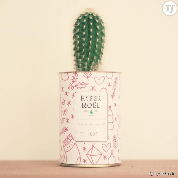 Un cactus en pot