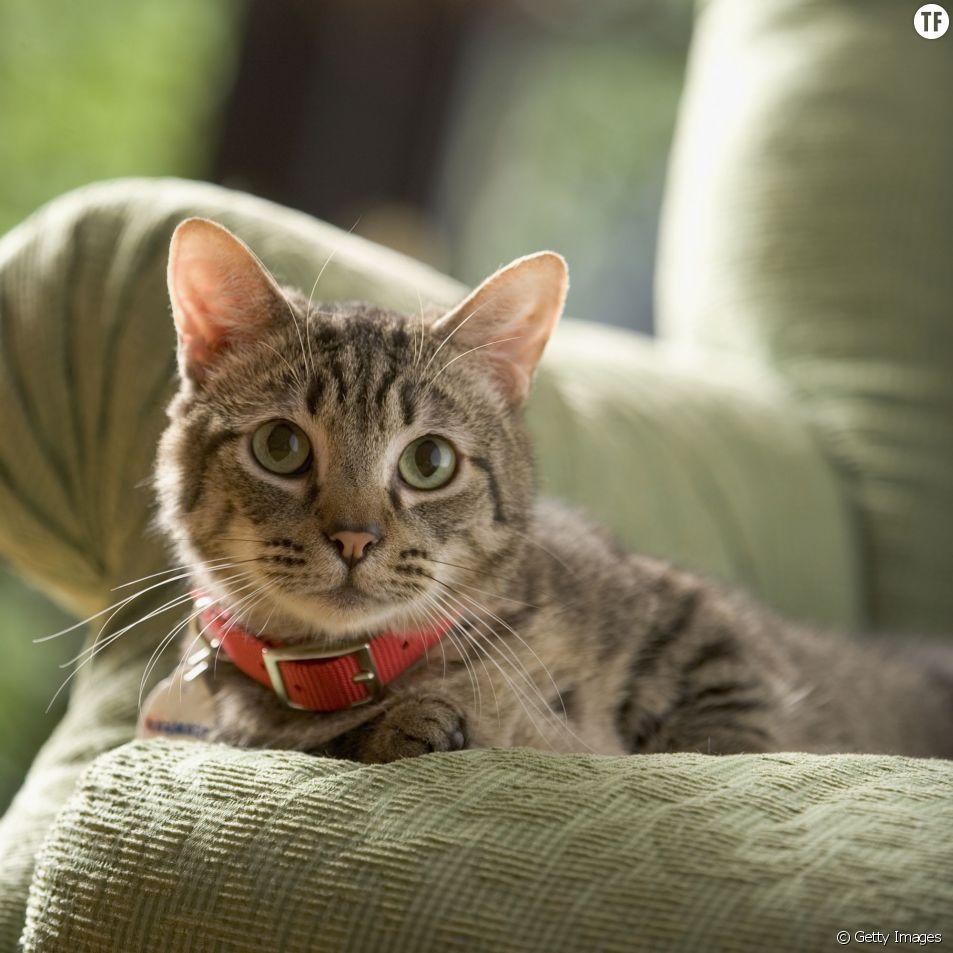 Les chats sont les prédateurs les plus redoutables de la planète