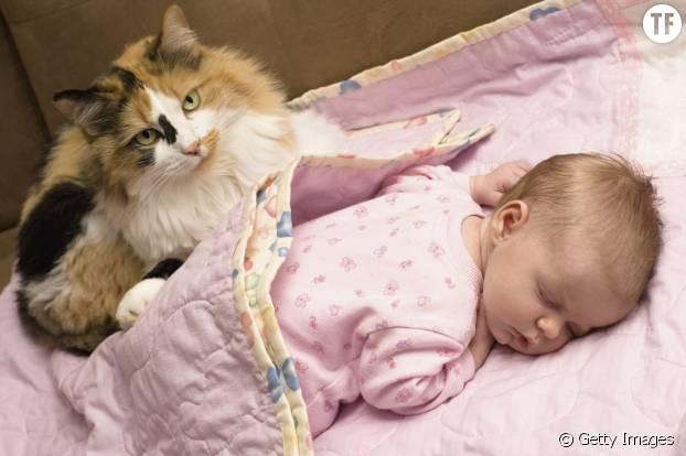 Chat Et Bébé Risques