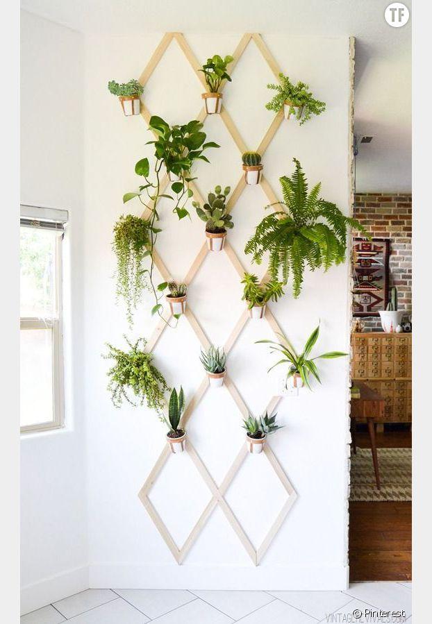Plantes murales