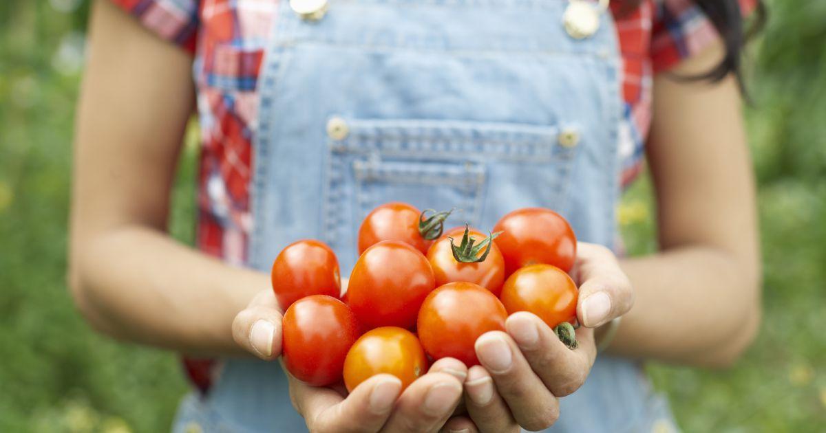 Voici la meilleure fa on de cuisiner des tomates terrafemina - Cuisiner les tomates sechees ...