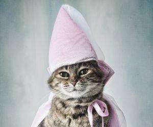 Halloween 2016 : 12 déguisements pour chat qu'on n'achètera jamais