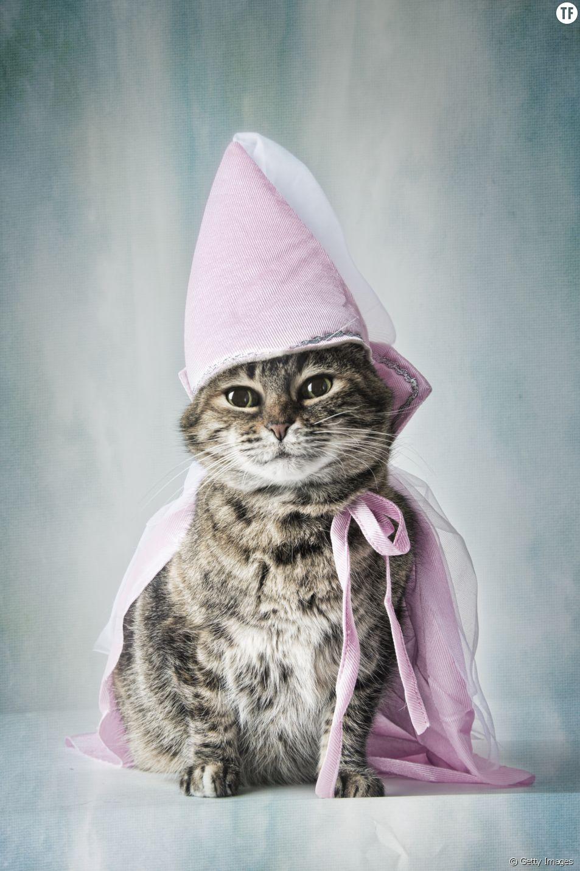 12 déguisements pour chats complètement ridicules
