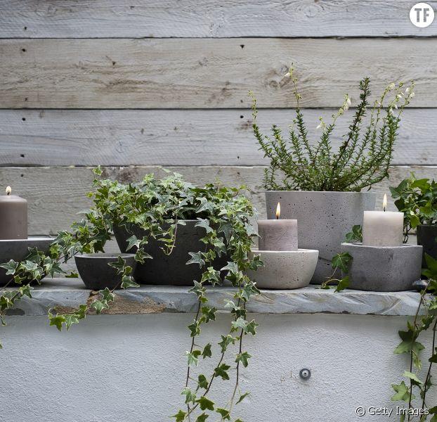 6 plantes qui vont vous aider dormir terrafemina - Plante qui fait dormir ...