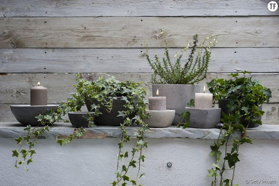 6 plantes qui vont vous aider à dormir