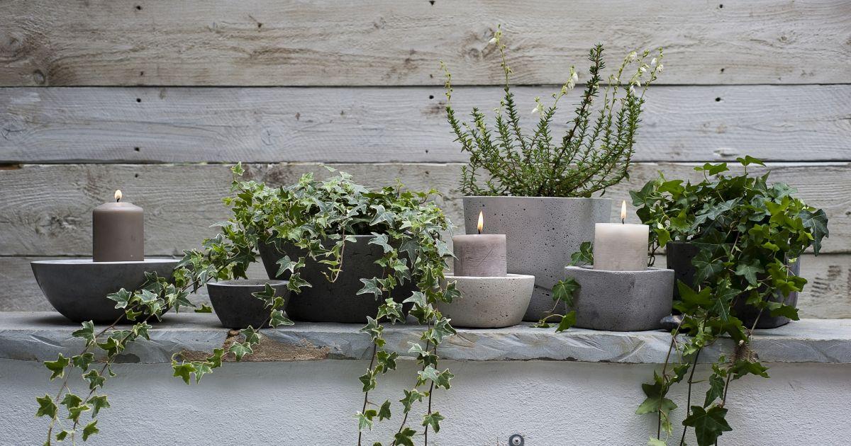 6 plantes qui vont vous aider dormir terrafemina. Black Bedroom Furniture Sets. Home Design Ideas