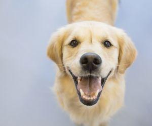 9 choses que votre chien déteste (sans que vous le sachiez)