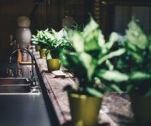 Comment arroser mes plantes pendant mes vacances quand je ne suis pas là ?
