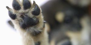 Se faire tatouer la patte de son chien, la nouvelle tendance qui buzze